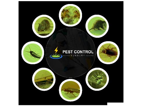 Pest Control Sunbury